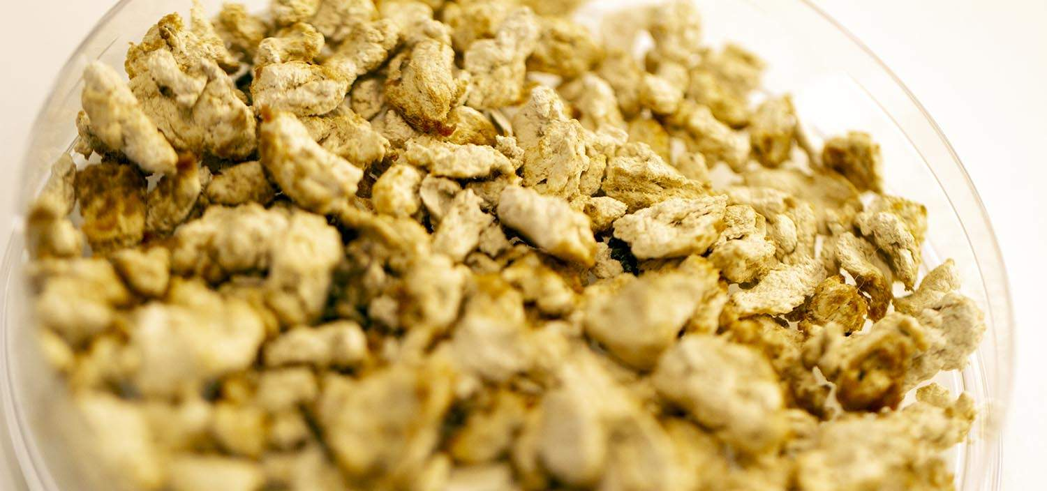 Mycorena takes fish feed production from lab to thousands of tons