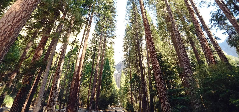 Batterier av träd kan driva elbilar